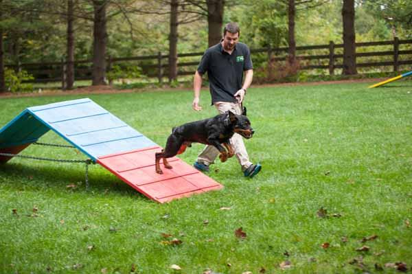 Dog Training Ellicott City